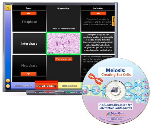 Meiosis Multimedia Lesson